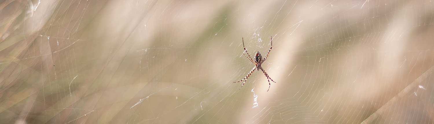 Suddenstrike Pest Control Cheshire | Domestic, Commercial, Agricultural | Spider